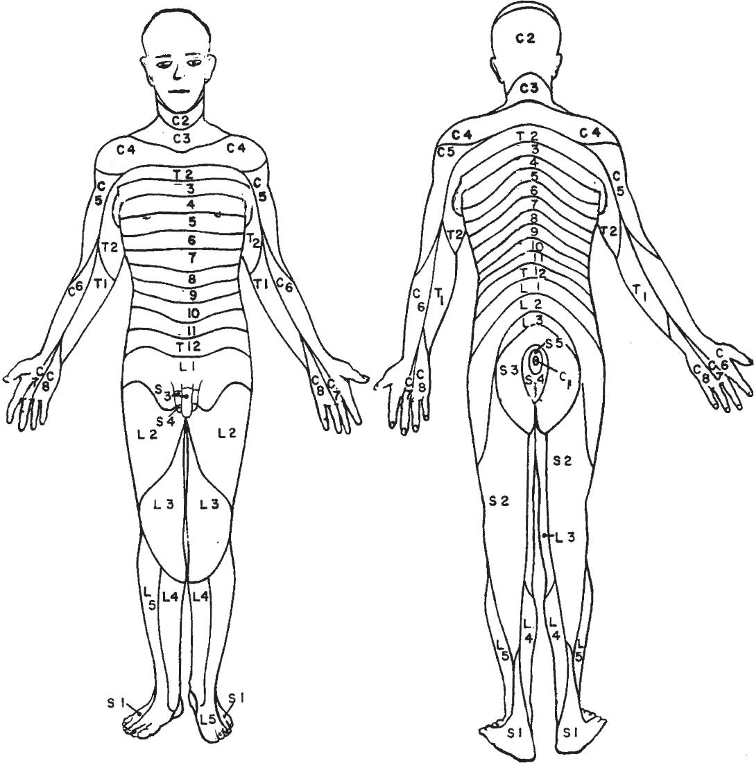 anatomy and normal development in children