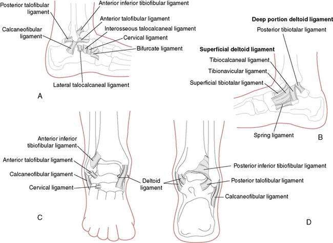 Foot and Ankle Injuries | Musculoskeletal Key