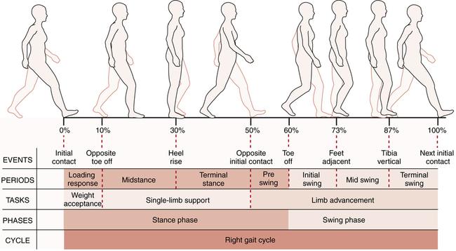 Gait musculoskeletal key