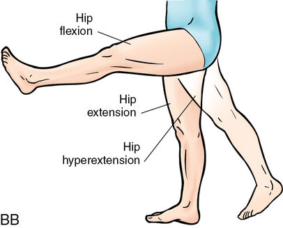 Attractive Hyperextension Anatomy Definition Image - Anatomy And ...