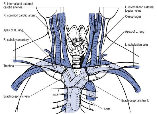 anatomy of the shoulder girdle | Musculoskeletal Key