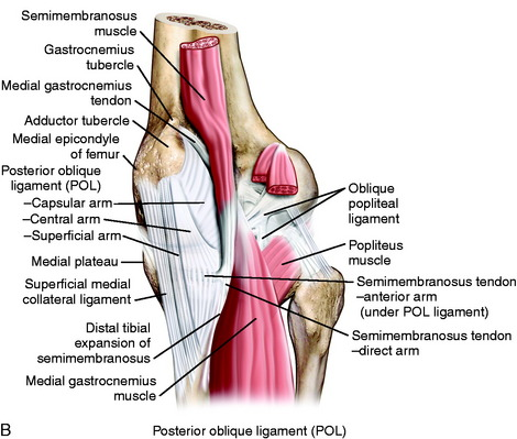 Medial and anterior knee anatomy musculoskeletal key image image ccuart Choice Image