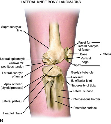 Lateral Posterior And Cruciate Knee Anatomy