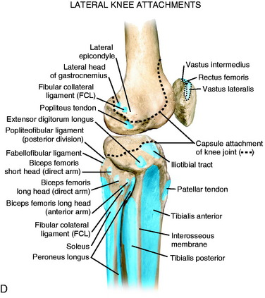Lateral posterior and cruciate knee anatomy musculoskeletal key figure 2 1 a bony anatomy of the posterior knee joint b bony anatomy of the lateral knee joint c key anatomic attachments of the posterior aspect of ccuart