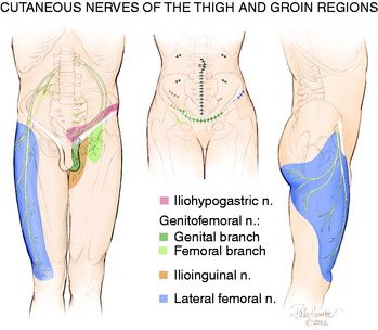 knee pain of neural origin | musculoskeletal key, Muscles