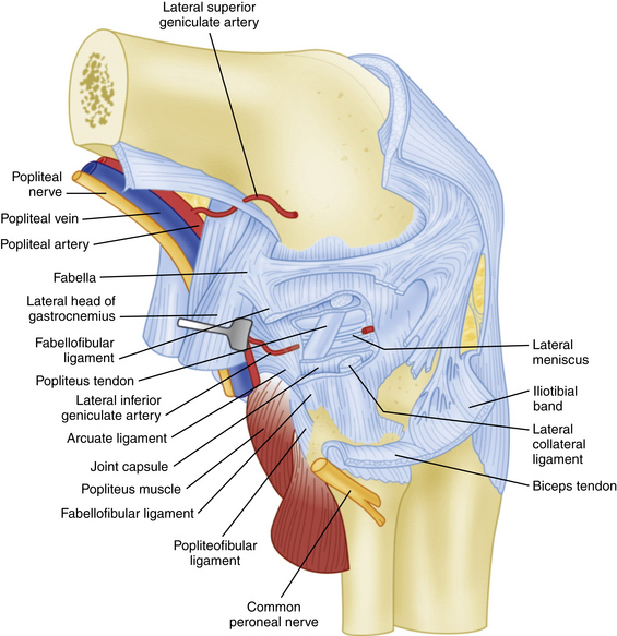 Anatomic reconstruction of the posterolateral corner figure 27 3 lateral view of the posterolateral corner demonstrating relationships of the anatomic structures within the three layers of the knee ccuart Images