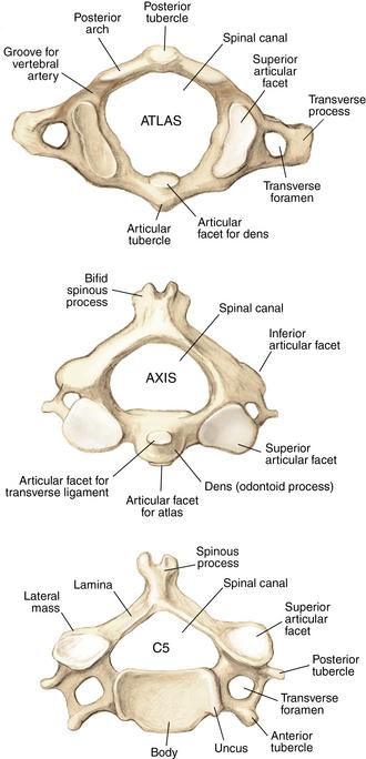 Spine | Musculoskeletal Key