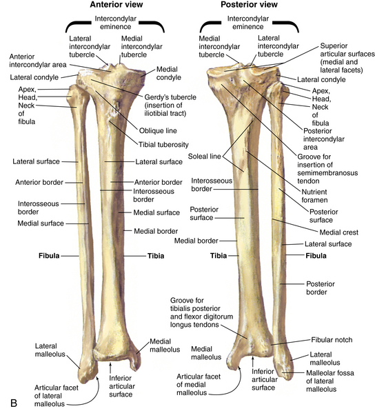 Knee and lower leg | Musculoskeletal Key