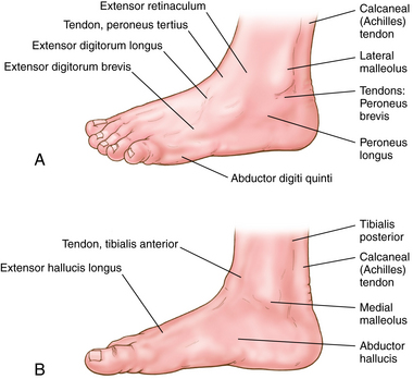 Foot bone anatomy chart