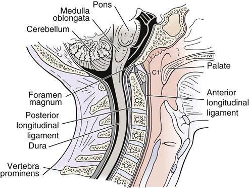 Cervical Spine Musculoskeletal Key