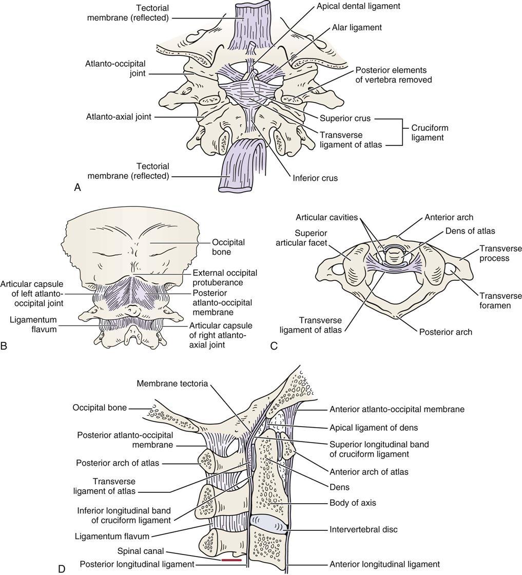 Cervical Spine | Musculoskeletal Key