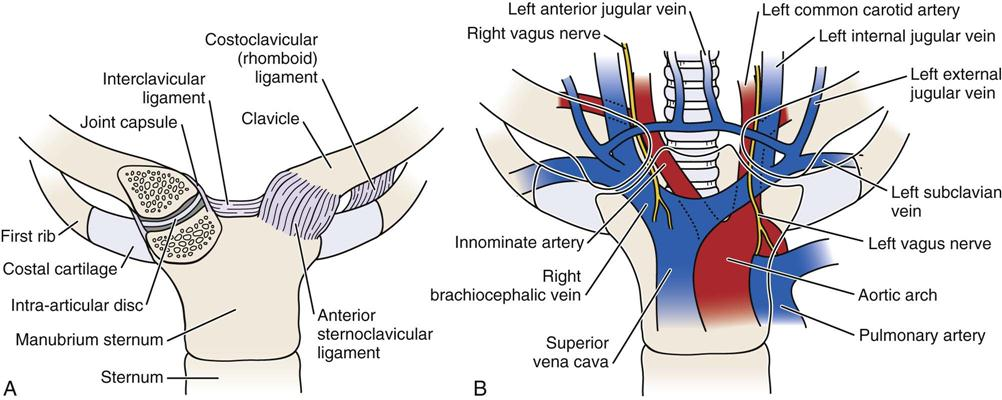 Perfect Sternoclavicular Joint Anatomy Illustration - Anatomy And ...