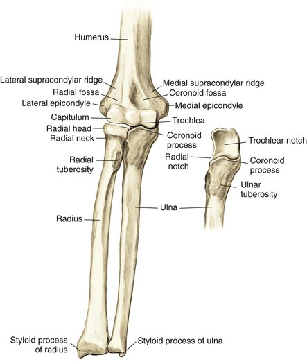 Elbow And Forearm Musculoskeletal Key