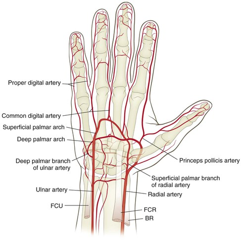 Wrist and Hand | Musculoskeletal Key
