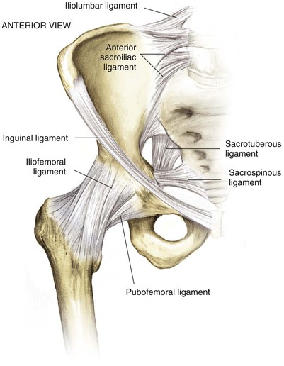 Hip and Pelvis | Musculoskeletal Key