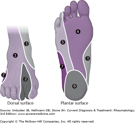 Approach to the Patient with Foot & Ankle Pain | Musculoskeletal Key