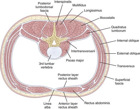 Lumbar spine muscle anatomy