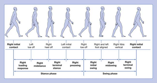 figure human gait cycle pictures to pin on pinterest running gait phases diagram #4