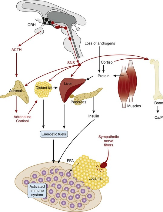 Neural Regulation of Pain and Inflammation | Musculoskeletal Key