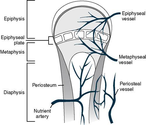 Orthoses In Orthopedic Care And Trauma
