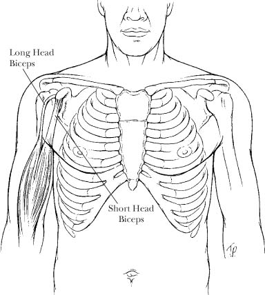 Examination Of The Biceps Tendon And Superior Labrum
