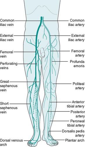 Vascular Assessment Musculoskeletal Key