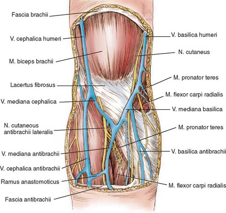 Anatomy Of The Elbow Joint Musculoskeletal Key