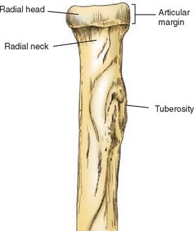 Radial head anatomy