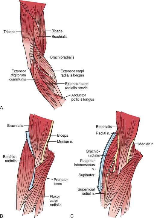 Nerve Entrapment Syndromes   Musculoskeletal Key