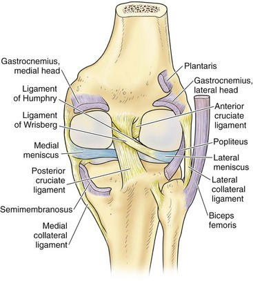Anatomy musculoskeletal key figure 1 35 posterior aspect of the knee the ligaments of humphry and wrisberg which attach the posterior horn of the lateral meniscus to the medial ccuart Choice Image
