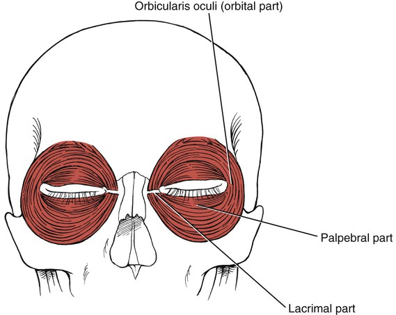 Assessment of Muscles Innervated by Cranial Nerves: Jacqueline ...