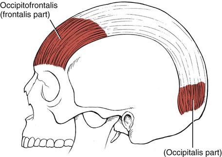 assessment of muscles innervated by cranial nerves: jacqueline, Human Body