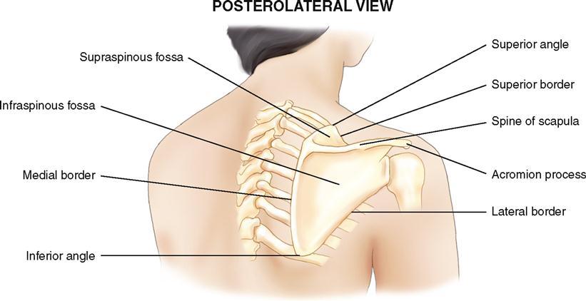5. bony palpation | musculoskeletal key, Human Body