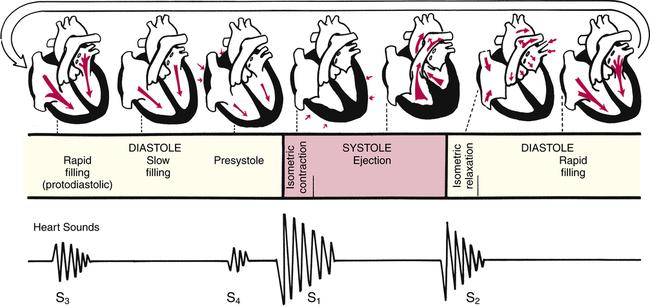 Cardiovascular System   Musculoskeletal Key