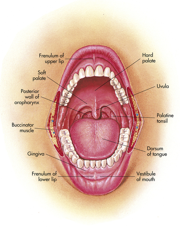 Ear Nose Throat And Mouth Musculoskeletal Key