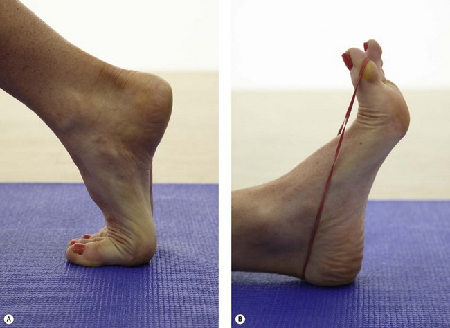 The Foot Musculoskeletal Key