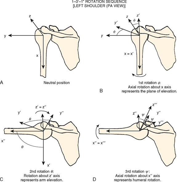 Biomechanics of the Shoulder | Musculoskeletal Key