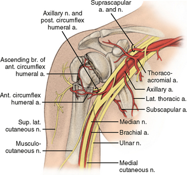 Fractures Of The Proximal Humerus Musculoskeletal Key