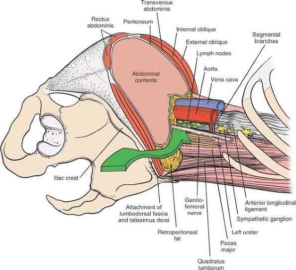 peritoneum anterio...