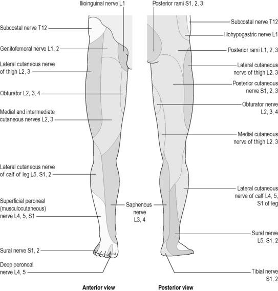 Essentials of Human Anatomy & Physiology Laboratory Manual, 7th Edition