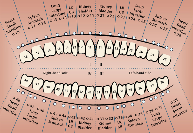 Oral Acupuncture | Musculoskeletal Key