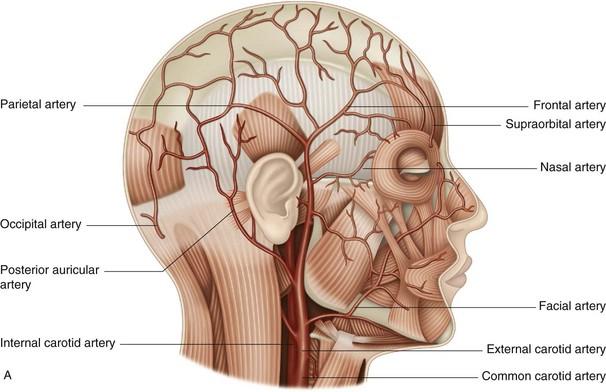 Occipital Artery The posterior a...