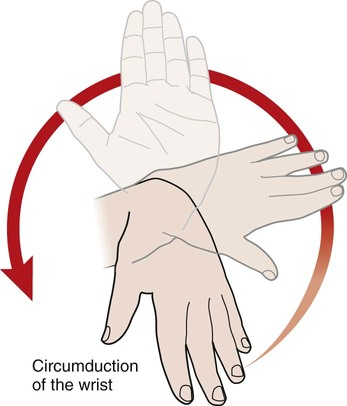 Circumduction Anatomy