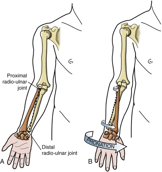 Structure and Function of the Elbow and Forearm Complex ...