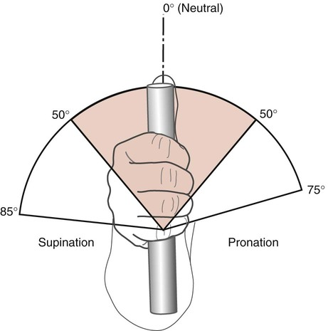Structure And Function Of The Elbow And Forearm Complex