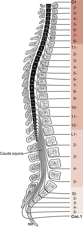 Structure and Function of the Vertebral Column ... Vertebrae Labeled