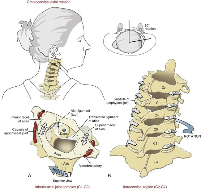 Structure and Function of the Vertebral Column | Musculoskeletal Key