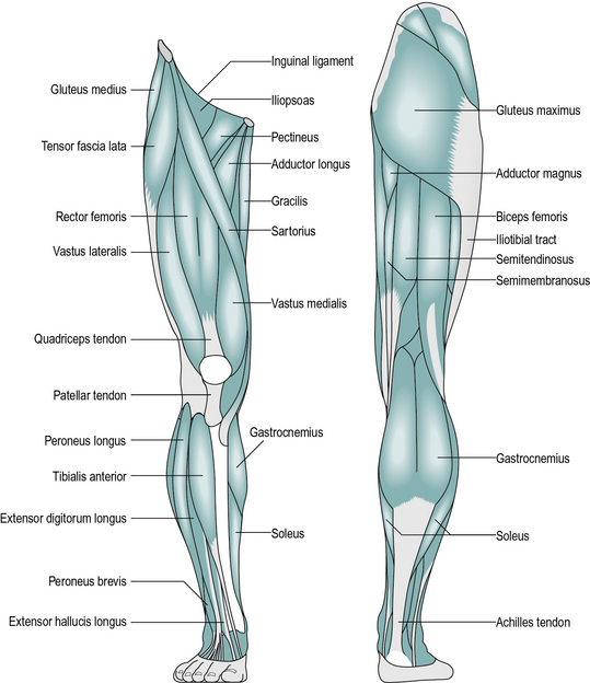 Basic Sciences Musculoskeletal Key