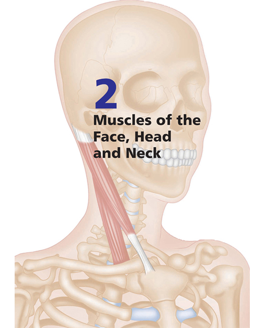 Muscles Of The Face Head And Neck Musculoskeletal Key