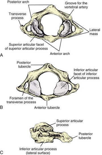 Functional Anatomy Of The Cervical Spine Musculoskeletal Key
